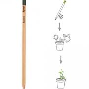 Matita Sprout